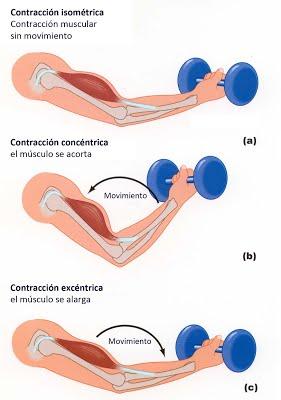 excéntrico-concéntrico-isométrico-01