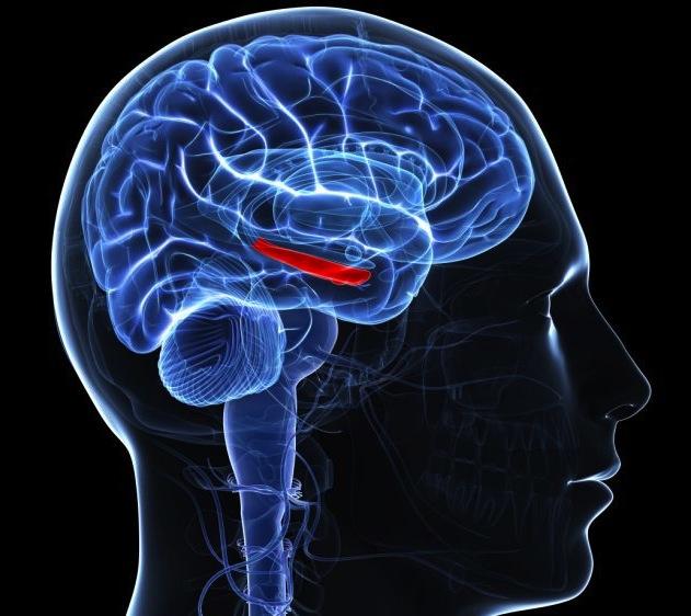 neurogenesis.jpg