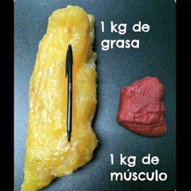 grasa y musculo