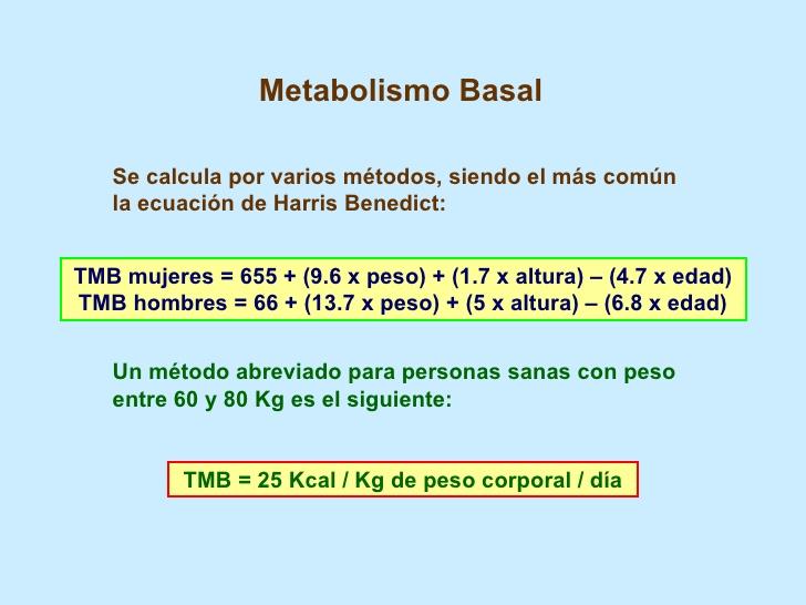 metabolismo basal.jpg