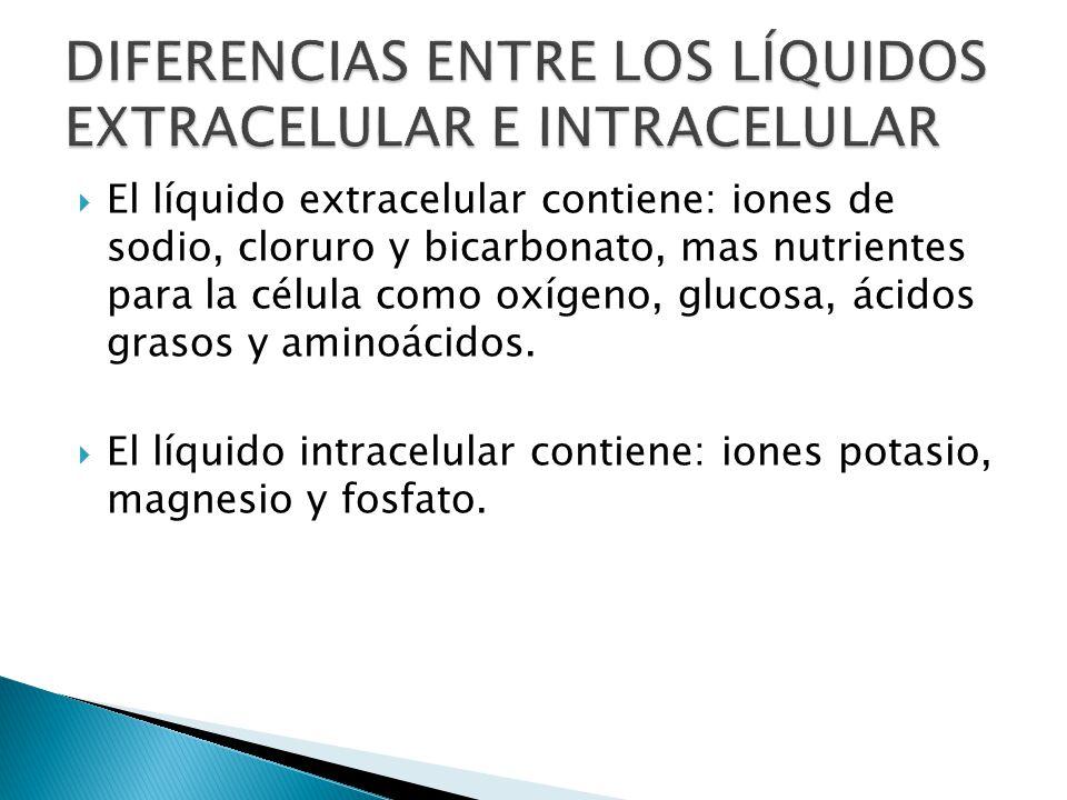 DIFERENCIAS+ENTRE+LOS+LÍQUIDOS+EXTRACELULAR+E+INTRACELULAR